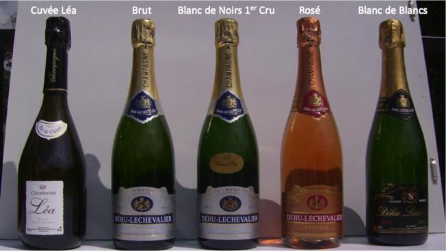 champagne c. niziolek