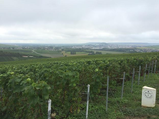 Vue de la parcelle sur la fin de la Vallée de la Marne, et au fond la ville d'Epernay